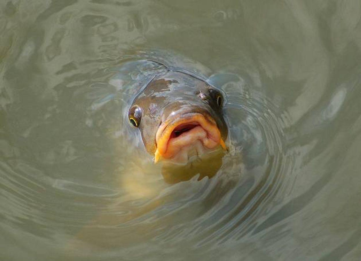 Afbeelding van Vissen zijn gevoelige dieren!