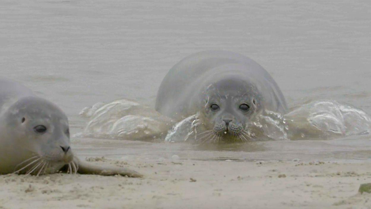 Afbeelding van Oog in oog met de zeehond
