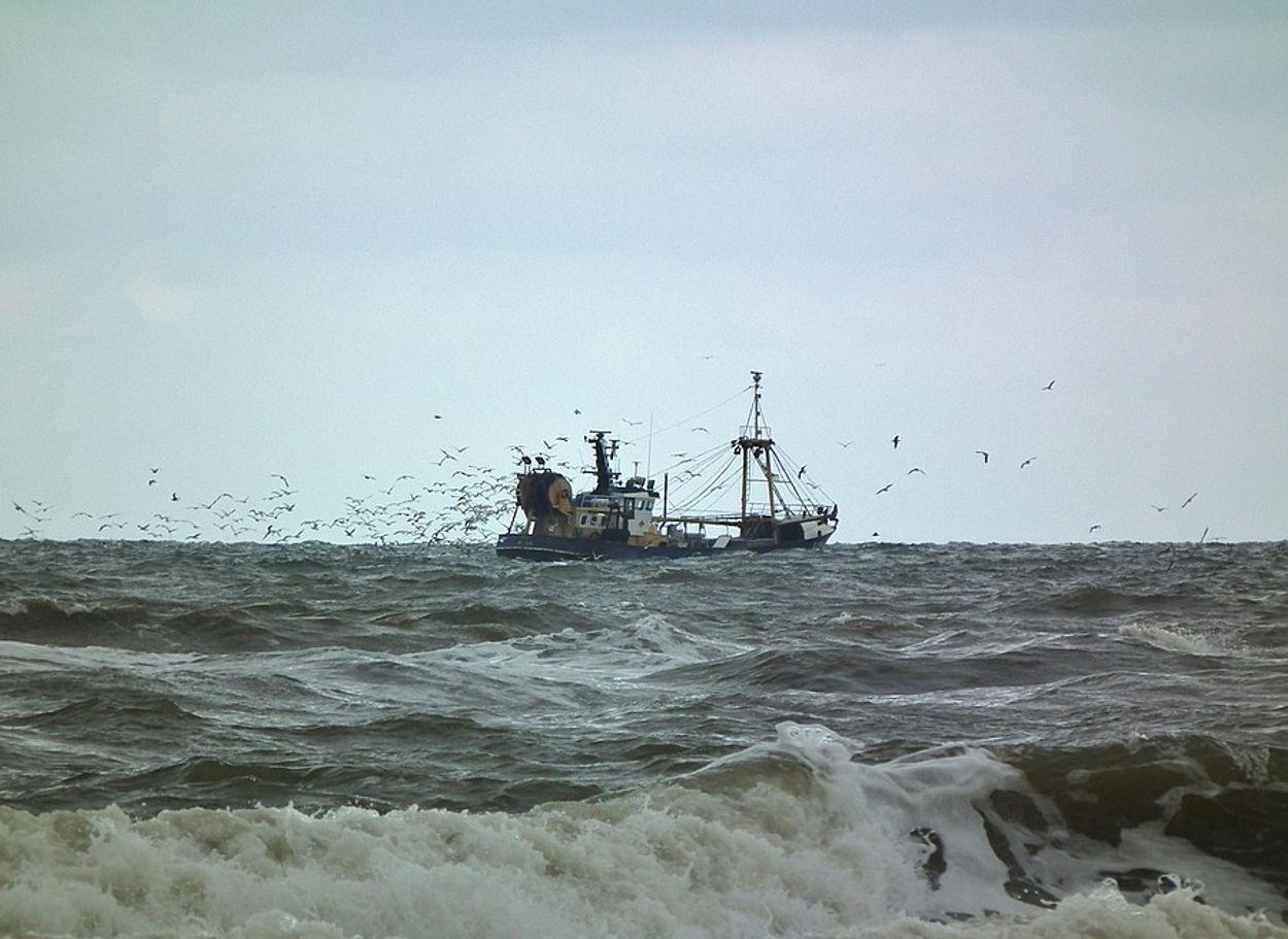 Afbeelding van Aantal geulen in Waddenzee gesloten voor garnalenvisserij
