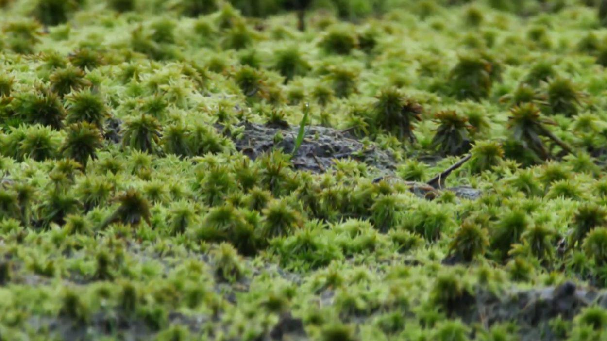Afbeelding van Hoogveen neemt meer CO2 op dan bos