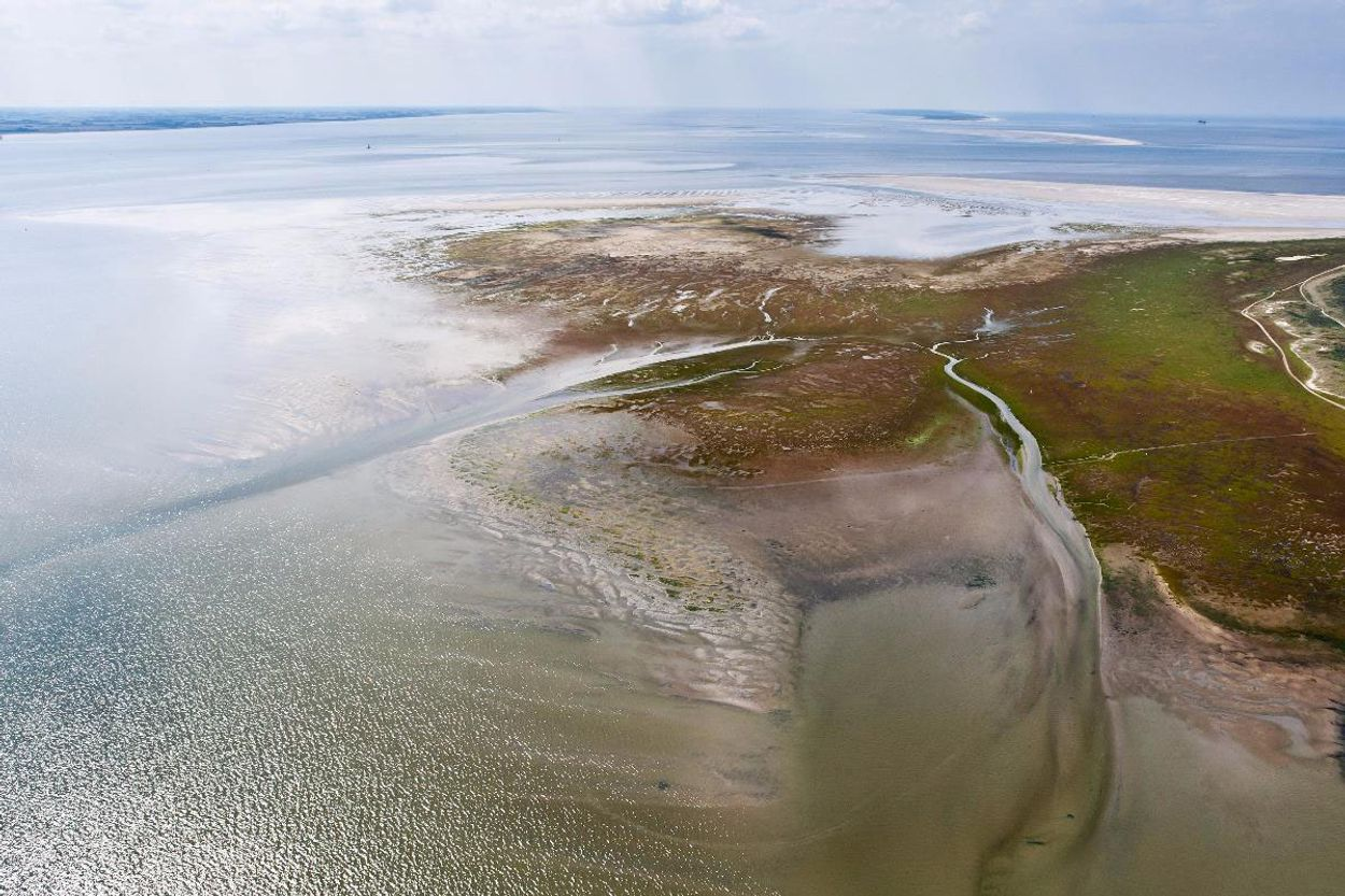 Afbeelding van 'Rijk moet stoppen met vergunning die Waddenzee schaden'