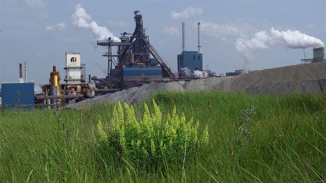 Afbeelding van Tata Steel: rechtszaak over uitstoot nog niet aan de orde