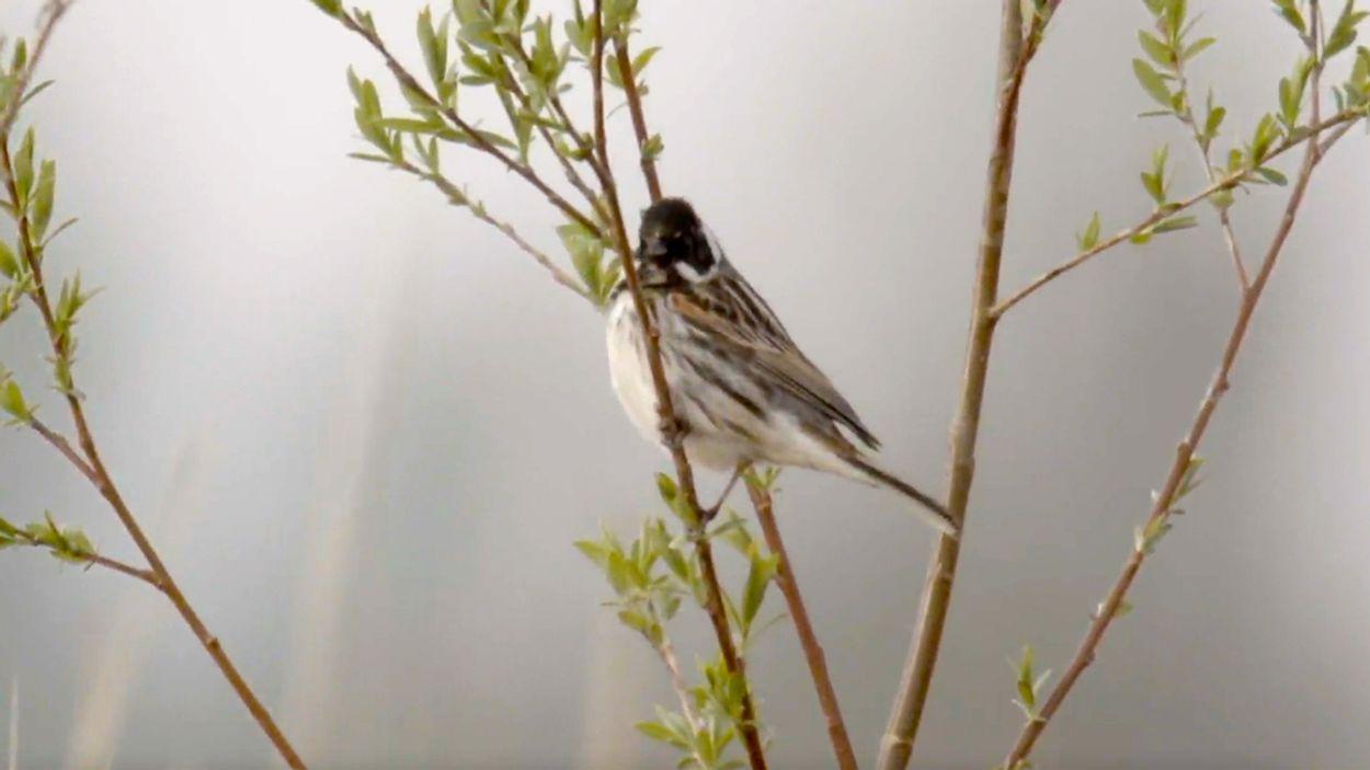 Afbeelding van Ook vogels profiteren van de Ruimte voor de Rivier