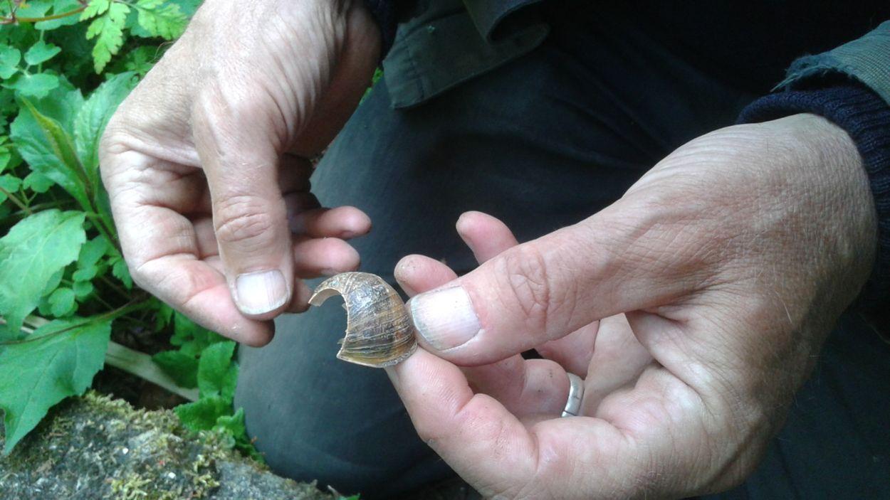 Afbeelding van Tuinverhalen: de slak