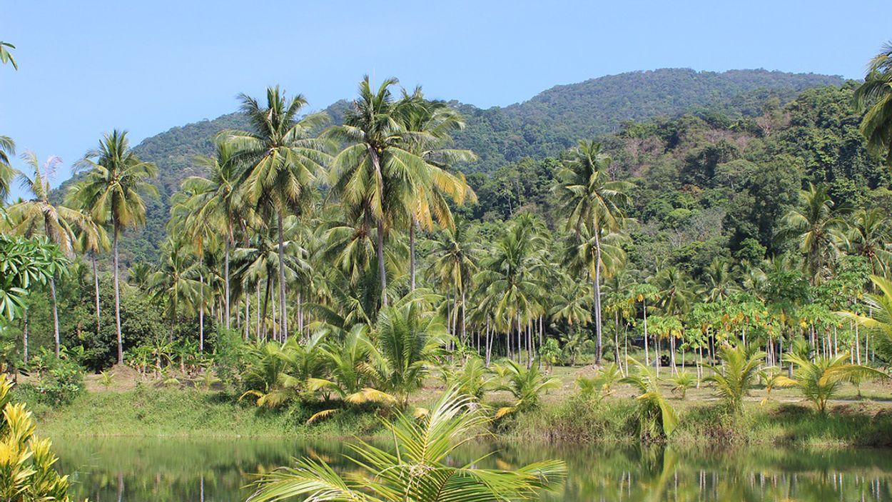 Afbeelding van '10.000 hectare bos gekapt voor palmolieleveranciers Neste'