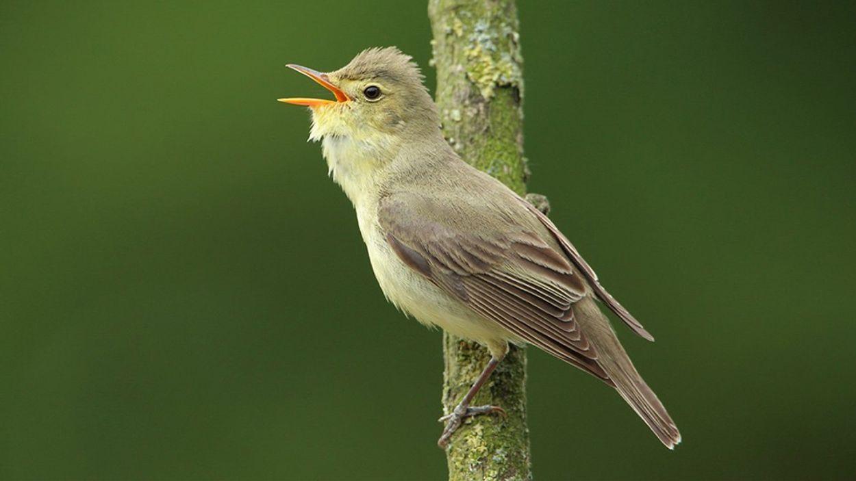 Afbeelding van Imiterende vogels, stikstofadvies, groene boeken en alle overige onderwerpen