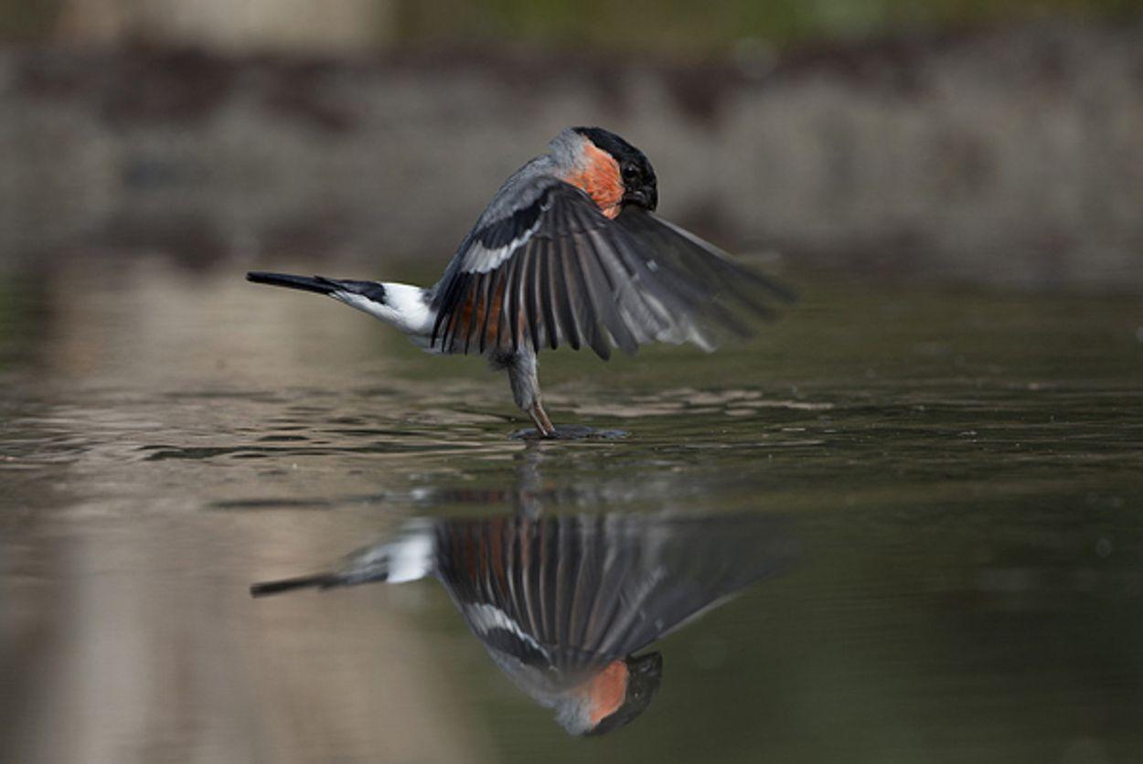 Afbeelding van Vogels zoeken verkoeling in bad