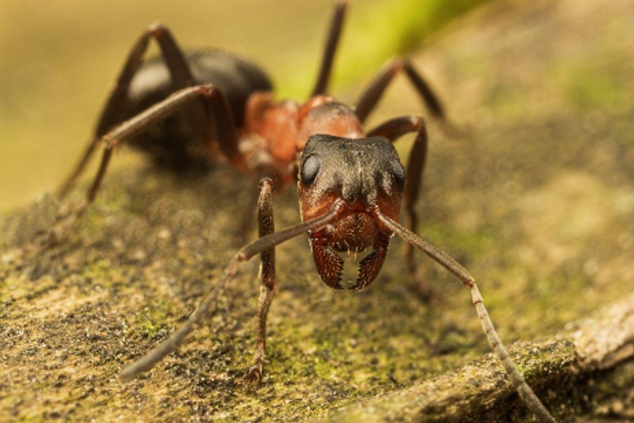 Afbeelding van Eerste mierenreservaat van Nederland