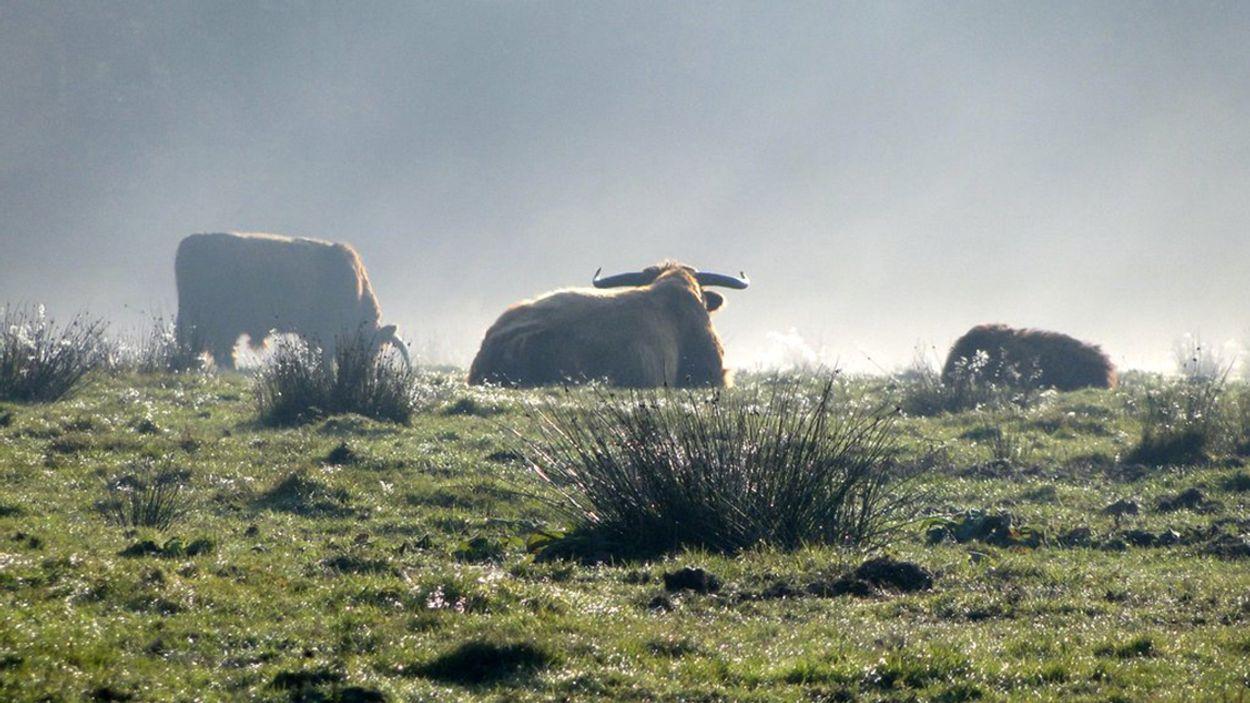 Afbeelding van Gelderland pakt met natuurbeheerders drukte op Veluwe aan
