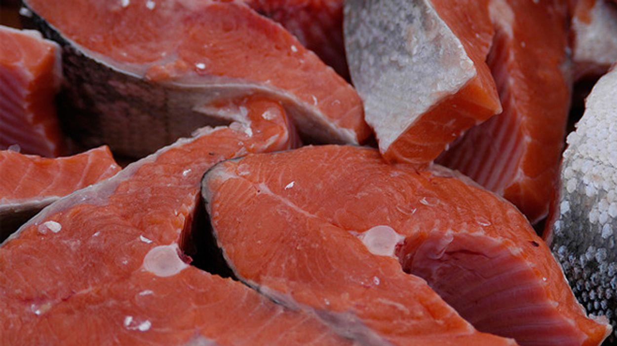 Afbeelding van 'Meer aandacht voor dierenwelzijn van kweekvissen'