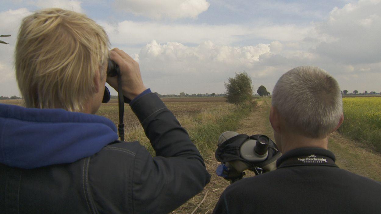 Afbeelding van Kraanvogels in Duitsland