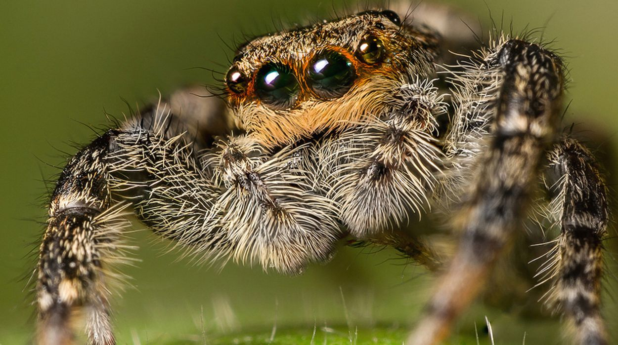 Afbeelding van Duizenden spinnen in huis? Goed idee!   Podcast