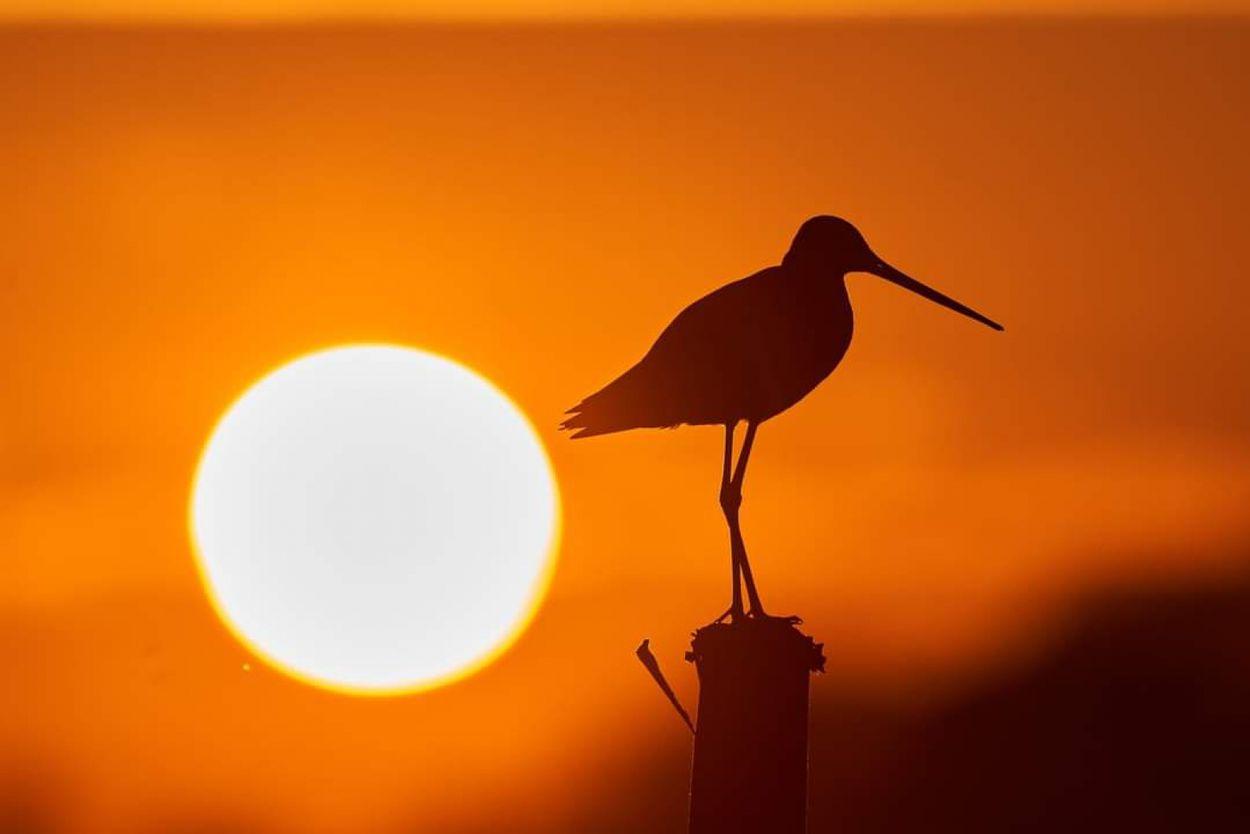 Afbeelding van Vroege Vogels Radio is terug op 15 augustus