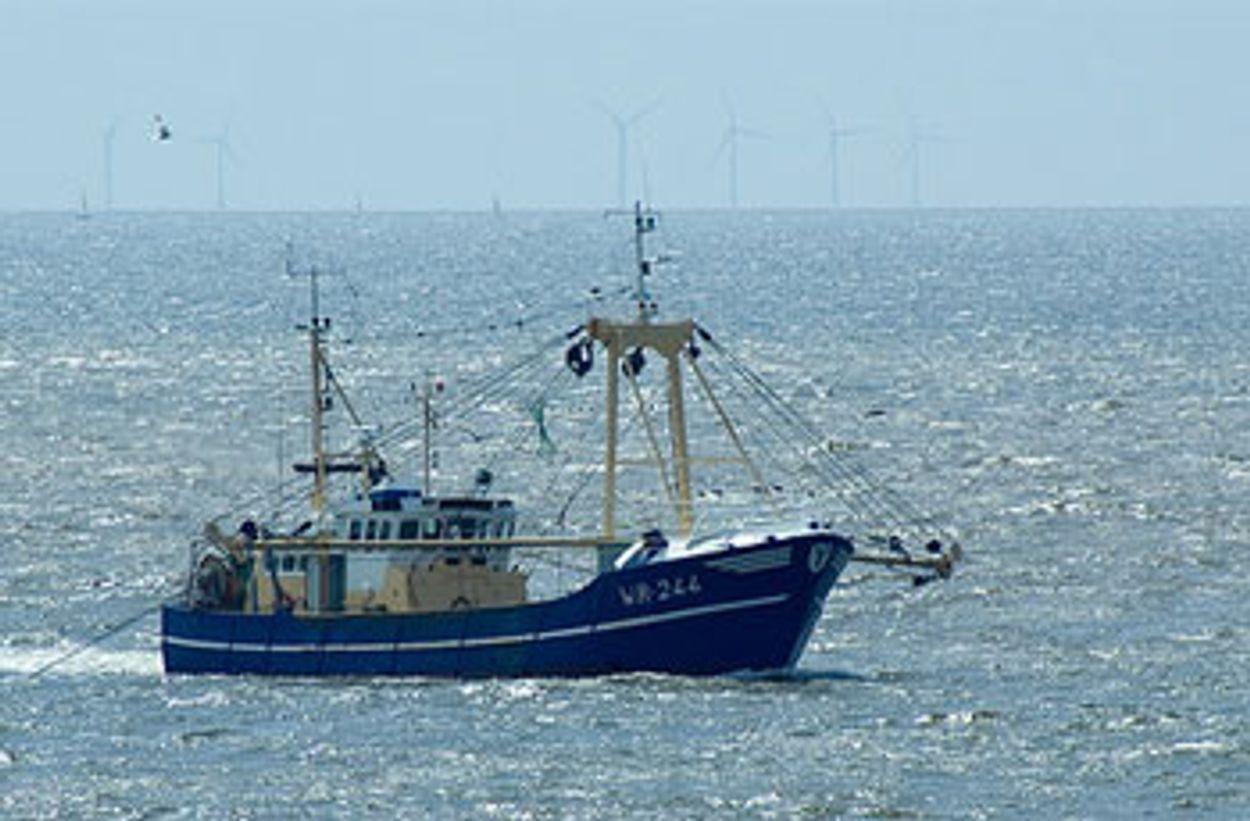 Afbeelding van Milieuclubs en kleine vissers willen actie NVWA tegen overbevissing