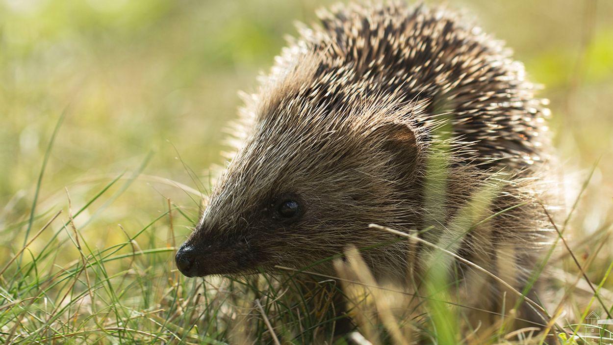 Afbeelding van Tel dit weekend de egels en bodemdieren in je tuin