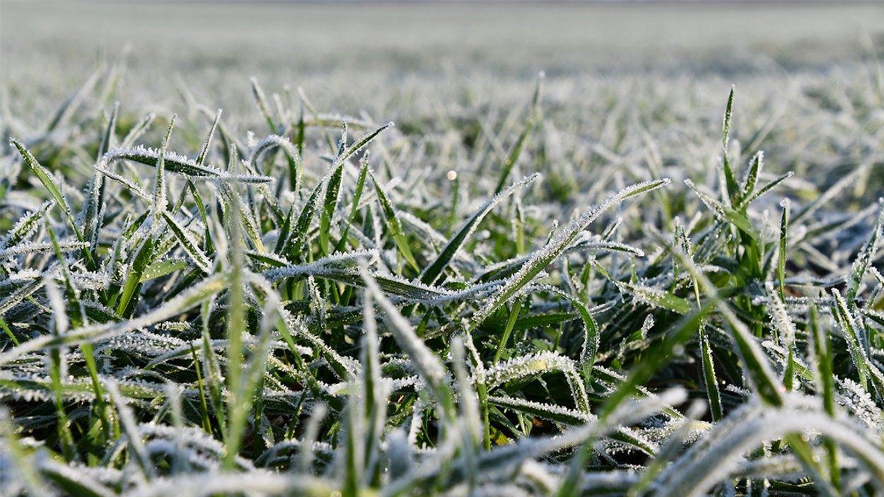 Afbeelding van 'Natuur niet van slag door zeer koud voorjaar'