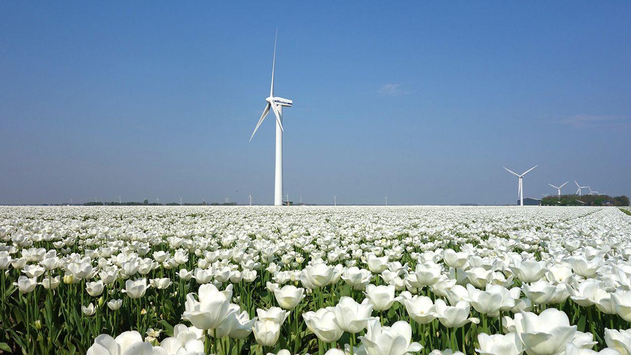 Afbeelding van Productie van groene stroom sterk toegenomen