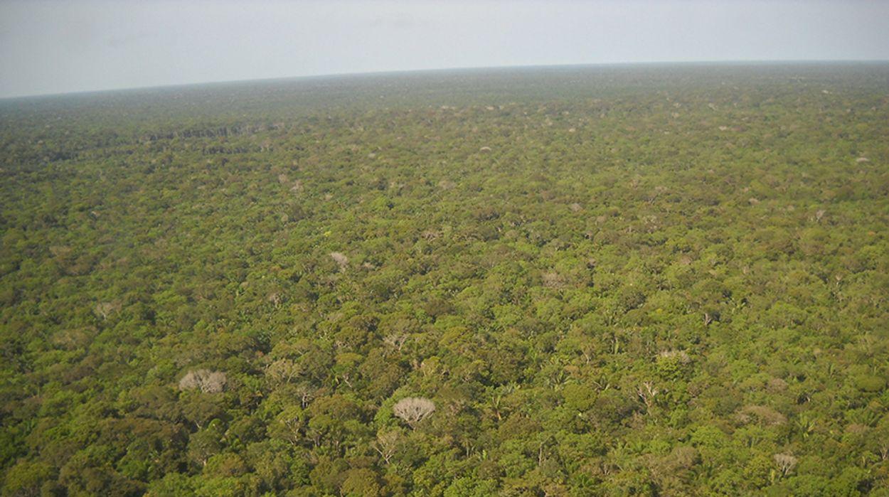 Afbeelding van Korstmossen, ontbossing, nijlganzen, mosselzaad en alle overige onderwerpen