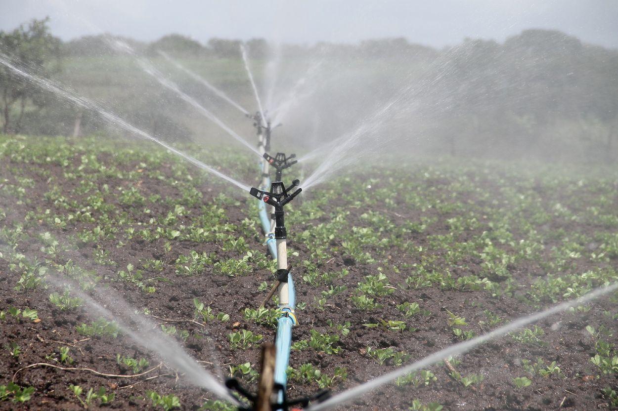 Afbeelding van Waterschap vraagt boeren om watergebruik onderling af te stemmen