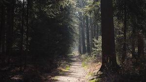 Afbeelding van De toekomst van de bossen