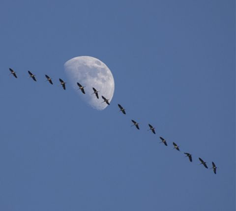 Sfeerfoto van Vroege Vogels