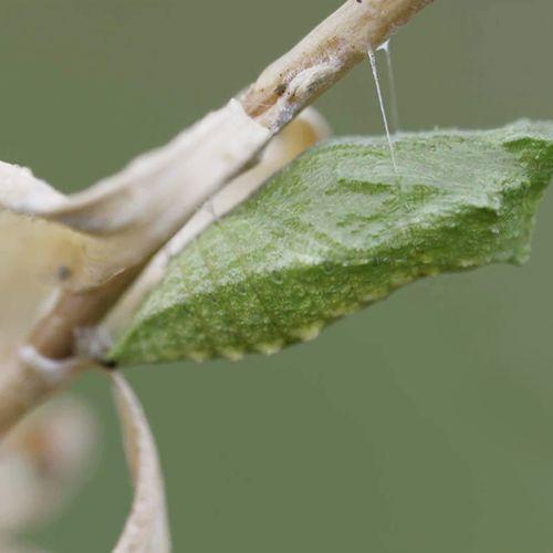 Afbeelding van Winter is het vlinderseizoen