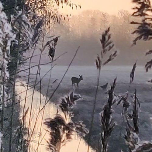 Afbeelding van Ree, haas en fazant in sprookjeswereld | Zelf Geschoten