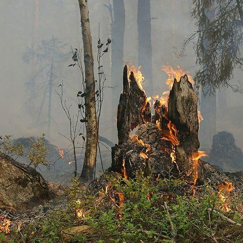 Afbeelding van Nieuw specialistisch team gaat helpen bij bosbranden