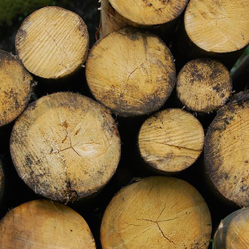 Afbeelding van Urgenda: liever aardgas dan biomassa