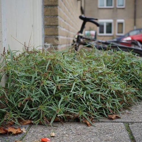 Afbeelding van De 330 planten van de Schilderswijk!