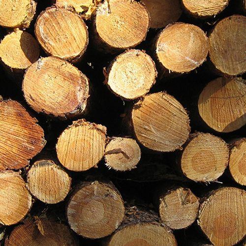 Afbeelding van Milieuclubs: stop met bijstoken van biomassa in kolencentrale