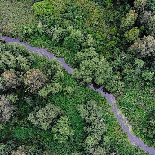 Afbeelding van Natuurorganisaties stoppen met steun voor biomassa na onderzoek
