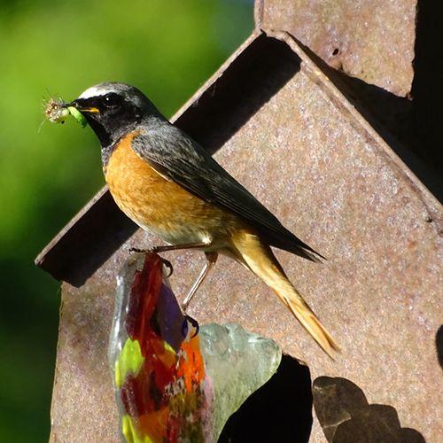 Afbeelding van Vraagbaak: meerdere vogelsoorten in één nestkast, is dat bijzonder?