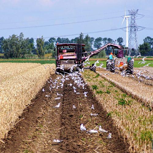 Afbeelding van Rekenkamer: EU laat boeren te veel water verkwisten