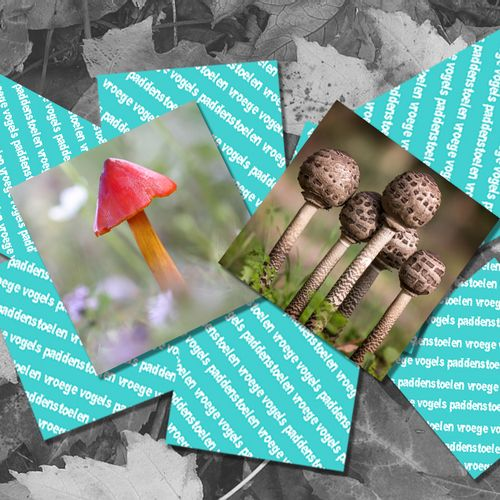 Afbeelding van Memory: herken de paddenstoel