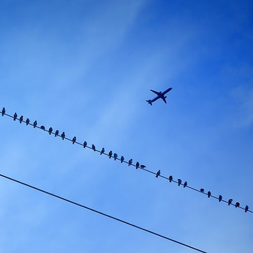 Afbeelding van 'Vliegverboden niet effectief tegen klimaatverandering'