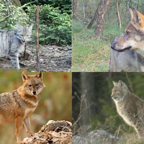 Afbeelding van Landschap delen met de nieuwe roofdieren