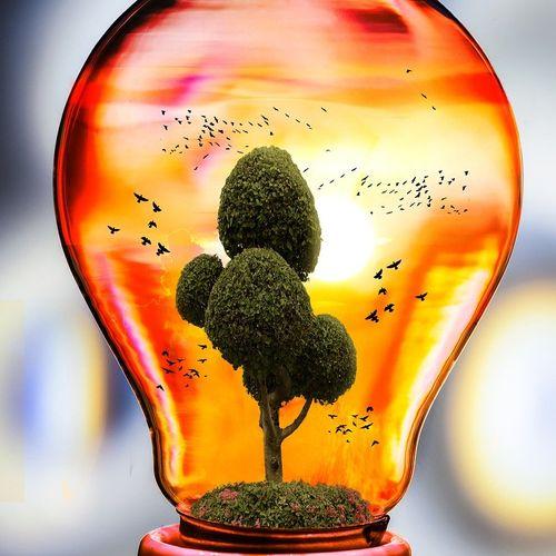Afbeelding van Bio-energiecentrale Harderwijk failliet