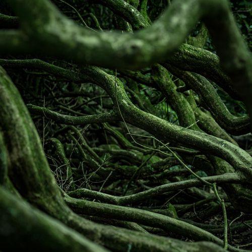 Afbeelding van Wonderlijke plantenwortels