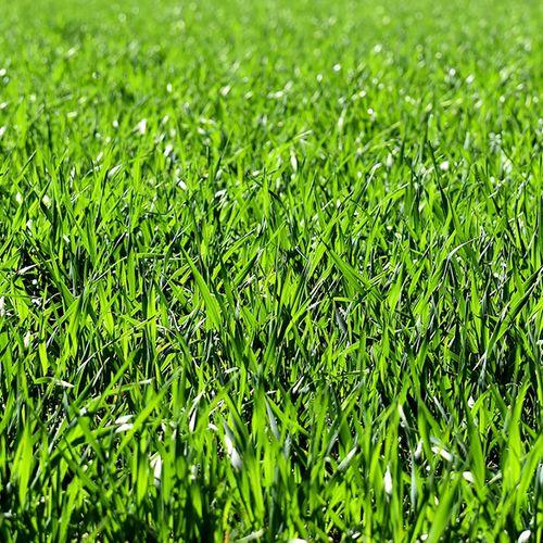 Afbeelding van Groen gras: eenvoudig en onmisbaar plantje