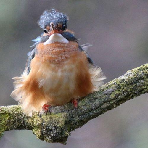 Afbeelding van Hoe overleven vogels een storm?