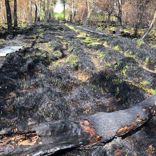 Afbeelding van Opleiding gestart voor adviseurs natuurbranden