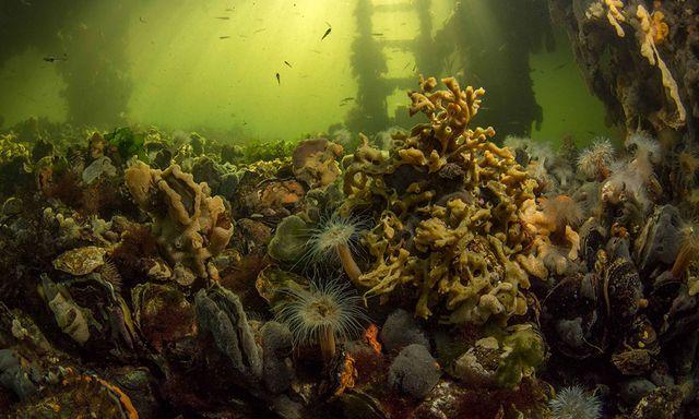 Afbeelding van Radio | 17 oktober 2021 | Tiny Sea Forest, kleine valeriaan en veeneiken