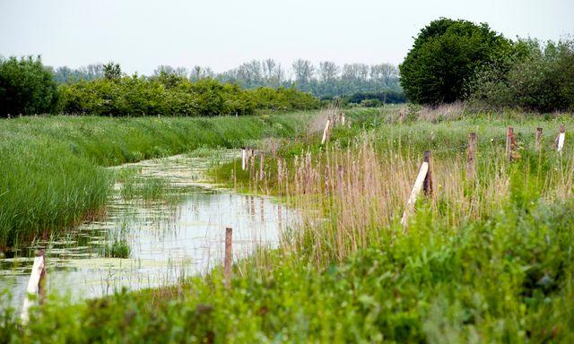 Afbeelding van Petitie: Natuurrijker Nederland, een gewaagd plan