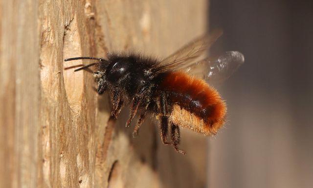 Afbeelding van Radio | 18 april 2021 | Metselbijen, koolmezen en mangaanknollen