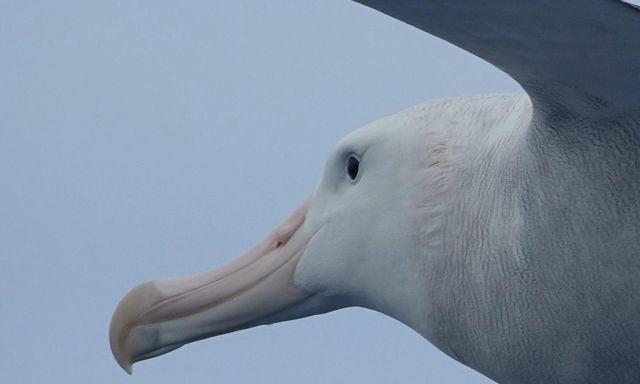 Afbeelding van Radio   19 september 2021   Leven op dood hout, albatros en schone sloten